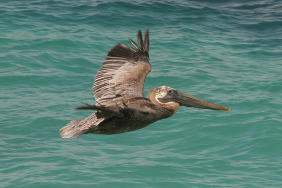 Bird flies over the Cancun sea