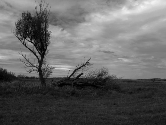nature landscape field tree sky could bw