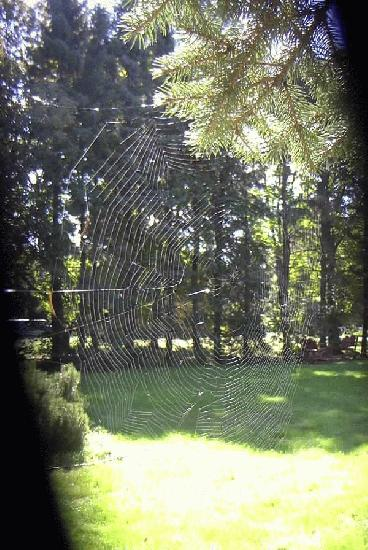 Spider Web in the back yard.
