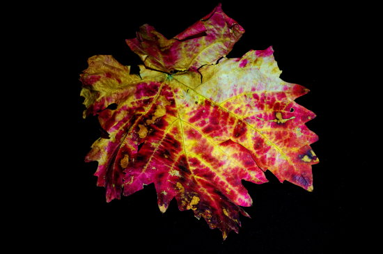 autumn dry leaf colorful