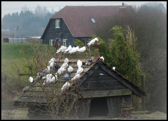 farm birds shed