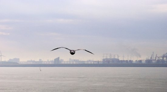 harbor rotterdam bird sea seagul horizon