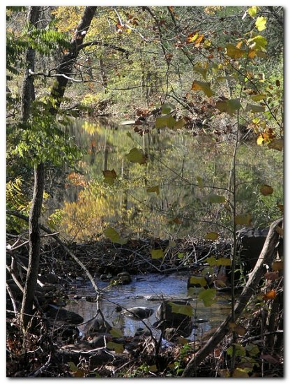 reflectionthrusday bearcreek ozarks fall