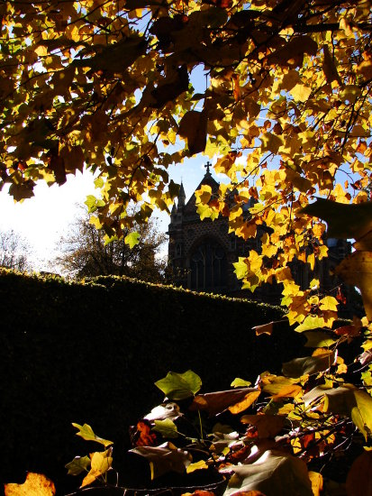 leaves autumn church