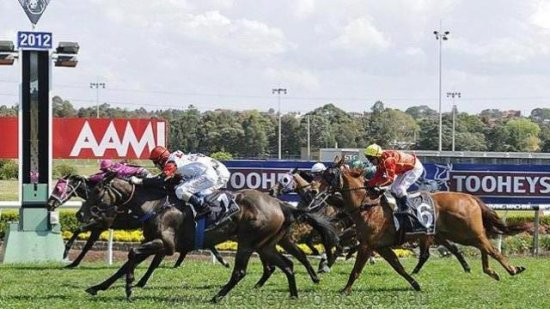 shares in racehorses horses for sale Australia Race horse for sale