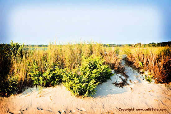 califfoto beach sand dunecape cod nature canon digital 30D