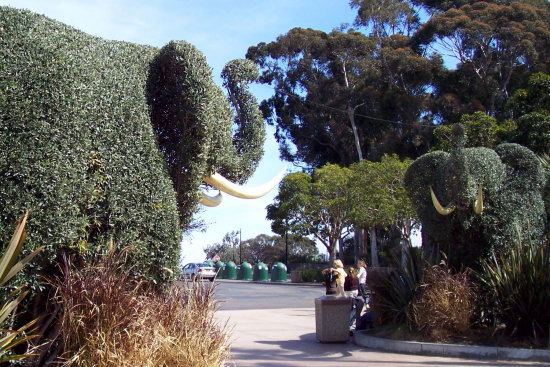 Elephant Hedges at entrance San Diego Zoo