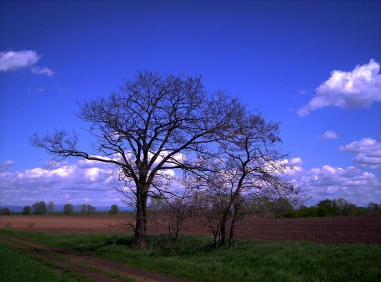 landscape nature tree field sky could before drift