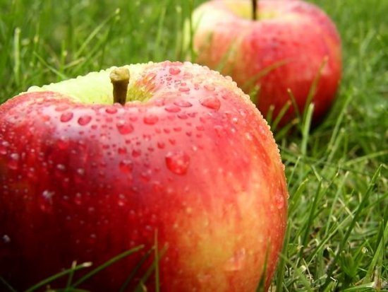 apples nature grass