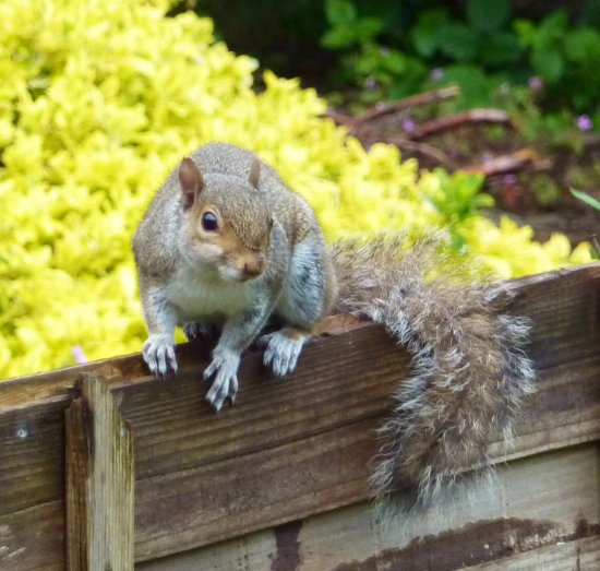 This cheeky little squirrel had just demolished my bird feeder!!!