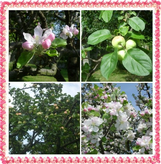 Blossoms and Fruits
