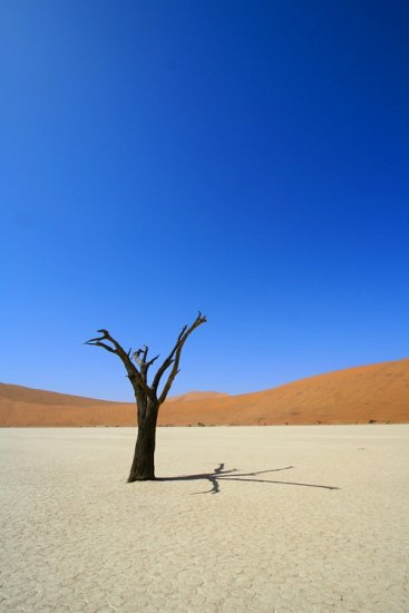 Sossusvlei Namibia Dead Tree Deadvlei compnature