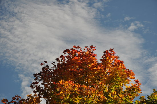 indian summer tree leaves cloud