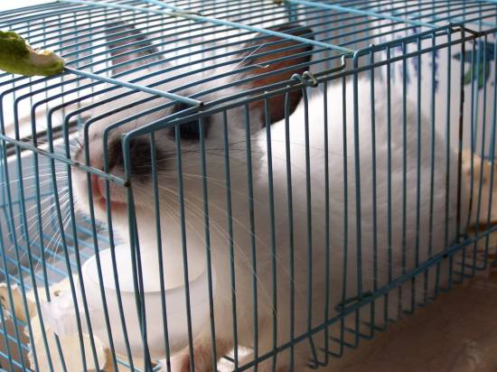 my pet:rabbit