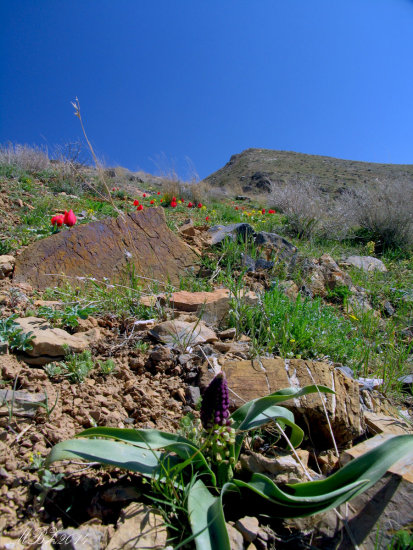 IRAN LANDSCAPE ASEMANKOOH mountains flower