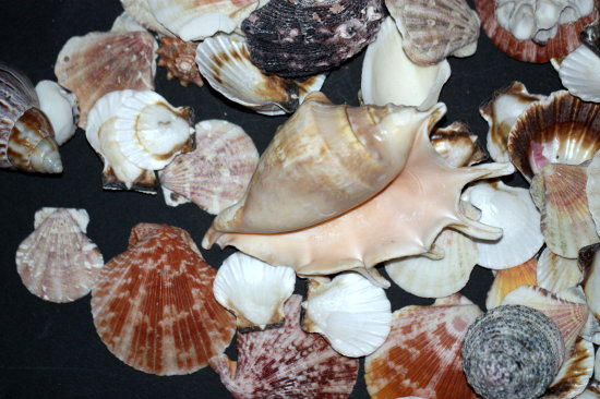 sea shells colors
