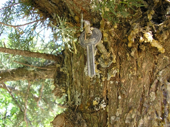 I couldn*t belive that I found this key on the tree,but it*really real :)) I couldn*t stop laughi...