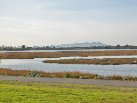 mlkparkfph shoreline oakland marsh park trail wetlands view bay