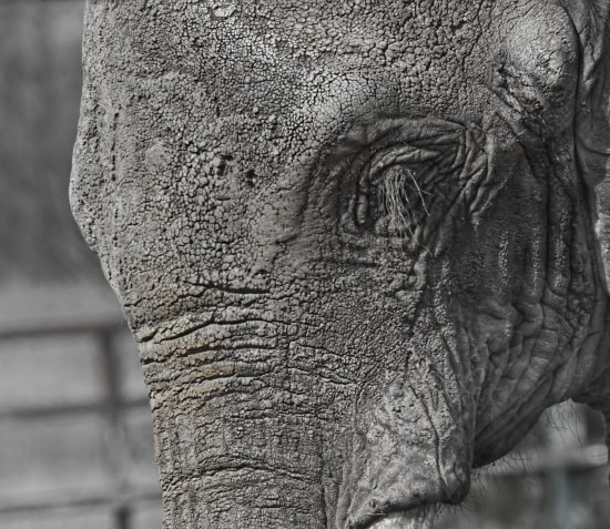 Elephant wildlife nature captive animals