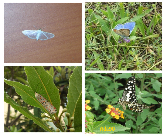 colorful butterfly butterflycollection