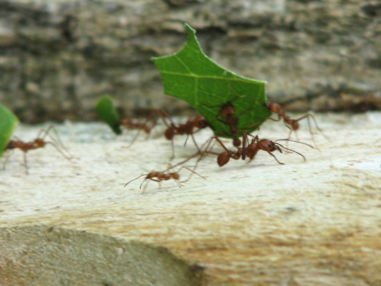 insects ants nature