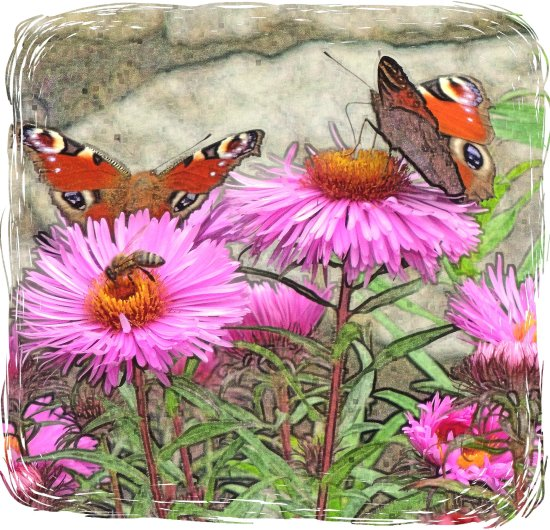 digitalartclub butterflies flowers