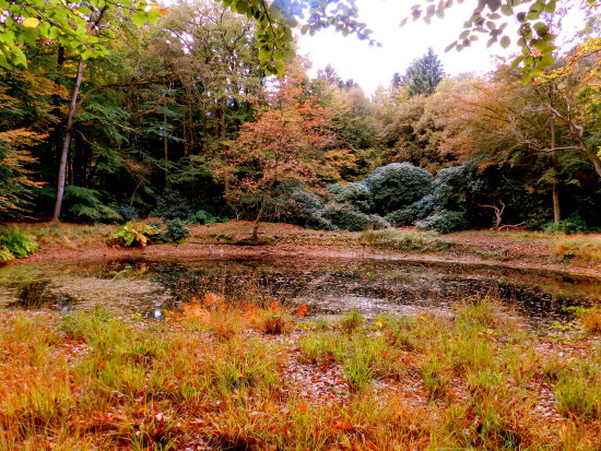 nature pond wood trees autumn