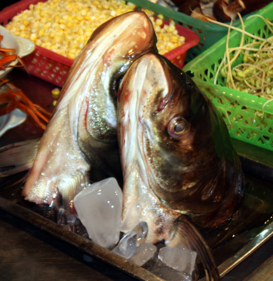 "Fish head  - ""Bighead Carp""