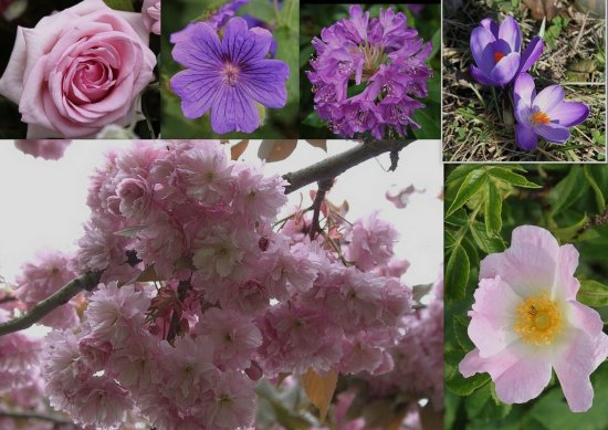 Collage of Pinks Purples