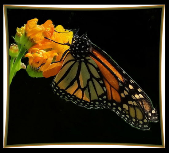 framedphotofriday butterfly