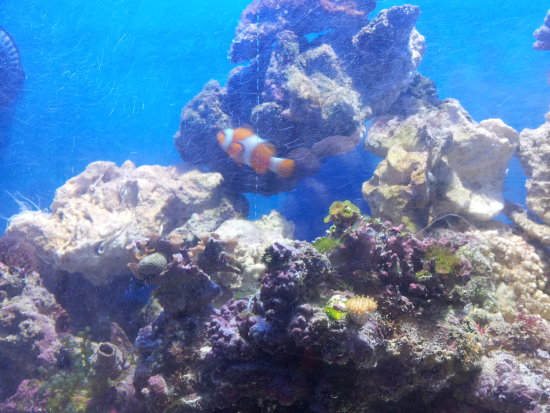 fish aquarium marine clown nemo anemone coral shrimp sand sea water