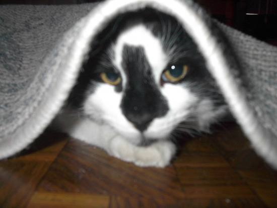 Oreo...playing hide and seek.::))