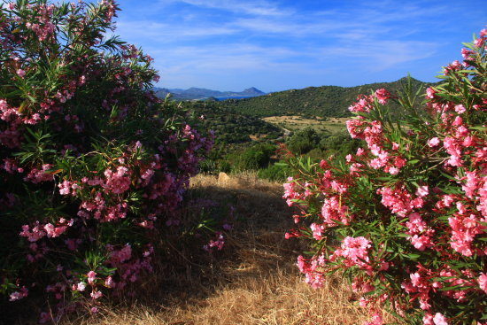 summer flowers in sardinea