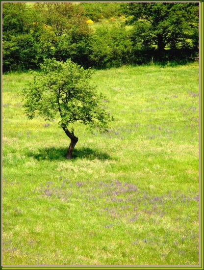 Tree nature France spring field meadow flowers landscape may