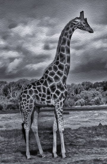 BW special Effect picture Wild Animals