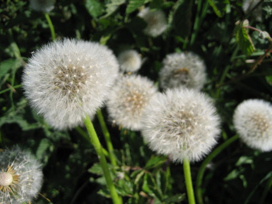 Seed heads of flowers