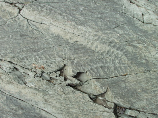 newfoundland fossils mistaken point