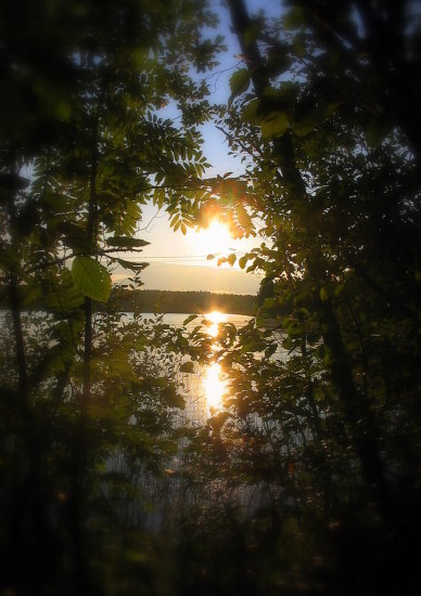 nature sunset forest lake