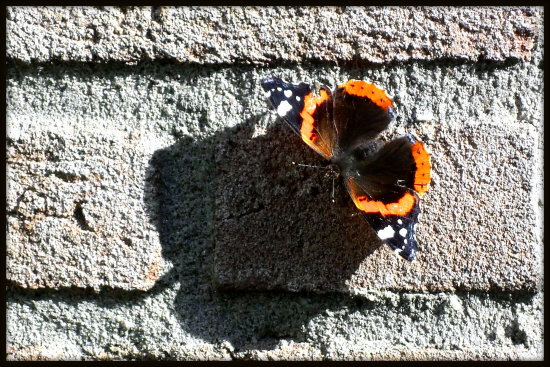 There are butterflies here! A lot of different birds also.  I enjoy every day here :-) When you...