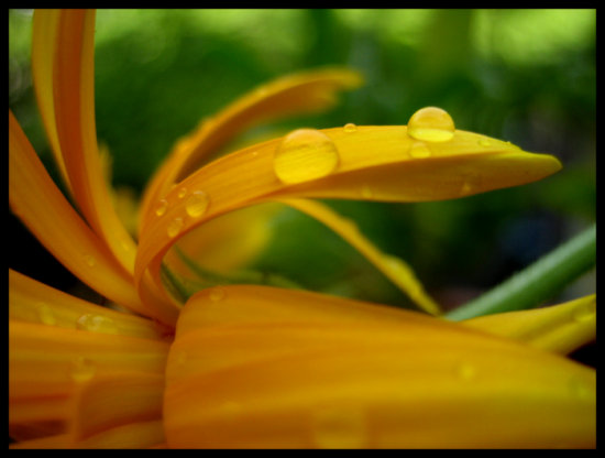 raindrops on a yellow flower