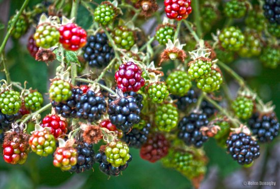 garden berries fruit