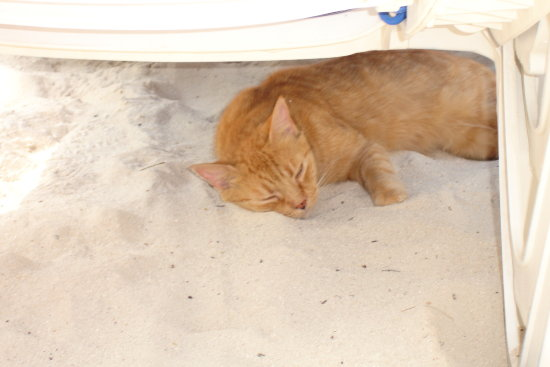 Cat nap on the beach in Aruba