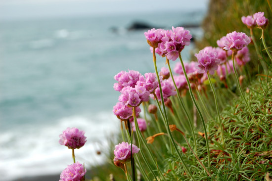 thrift marsland mouth devon