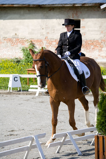 Generals first dressage performance