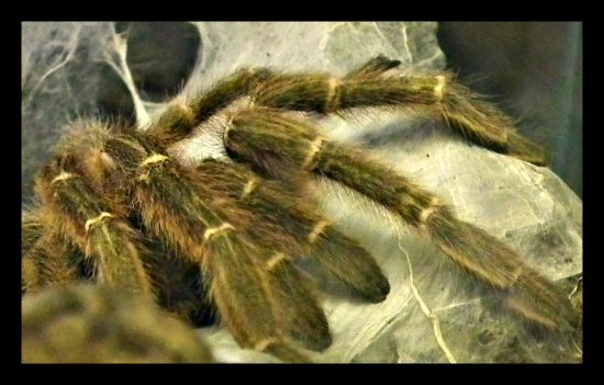 Spider monster nightmare phobia creepy scary