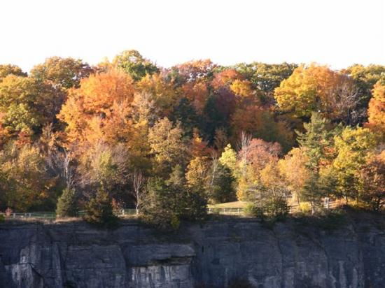 fall trees cliffs autumn color