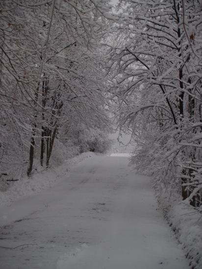 road trees snow