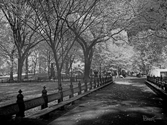 infrared bw tree park nature NYC