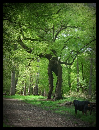 burnham beeches buckinghamshire