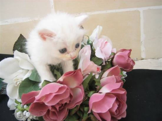 cute kitten white